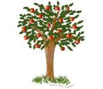 Az almafa